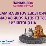 Assurance animaux : Mutuelle Pour Animaux Carrefour : eca assurance animaux telephone | Offres