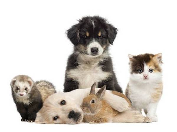 Mutuelle Animaux Lcl