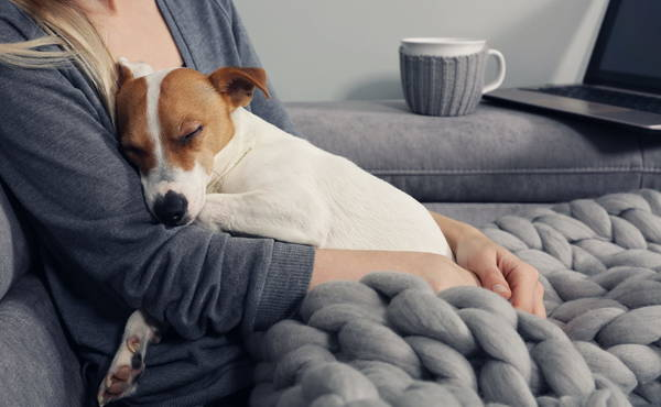 Mutuelle Animaux Pas Cher